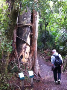 Punakaiki rainforest path