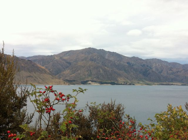 From West Coast to Queenstown, Lake Hawea