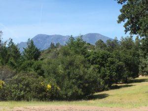 Ancient volcano Napa Valley