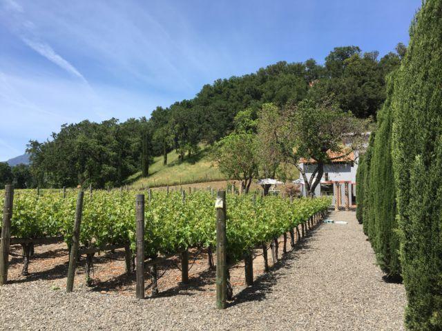 Clos Pegase Vineyards Napa Valley