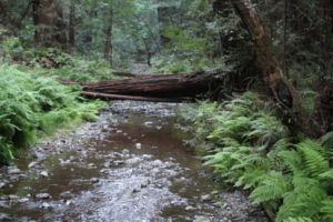 Muir Woods Redwood Creek