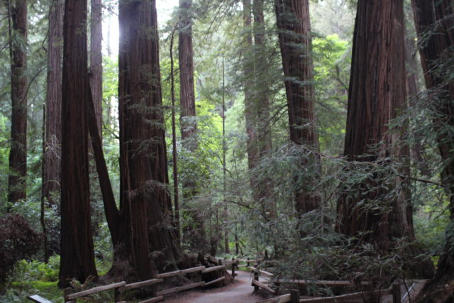 how to get to muir woods from san francisco