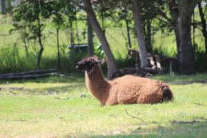 Old Faithful Geyser animal park