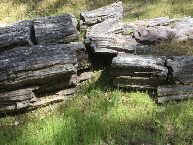 Petrified Forest wood