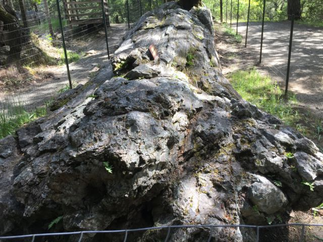 Petrified redwood Napa Valley