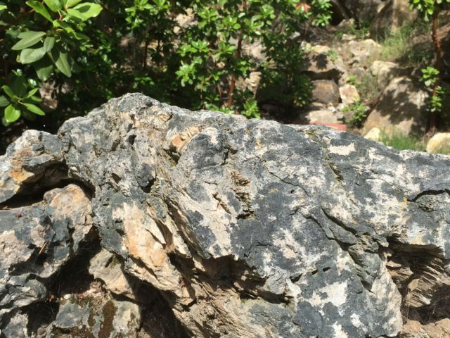 Petrified wood Napa Valley