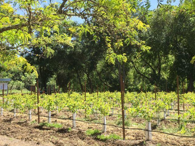 Sterling Vineyards Napa