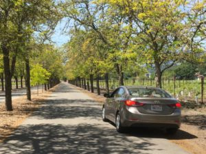 Sterling Vineyards road