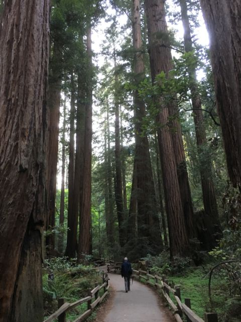 Walking the Muir Woods Redwood Creek Trail