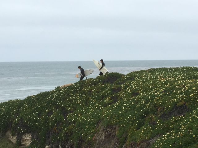 West Cliff Drive surfers