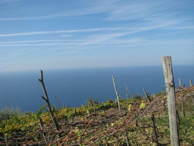 Cinque Terre Manarola vineyards