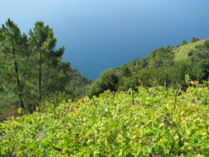Hiking Cinque Terre Trails, vineyards and sea