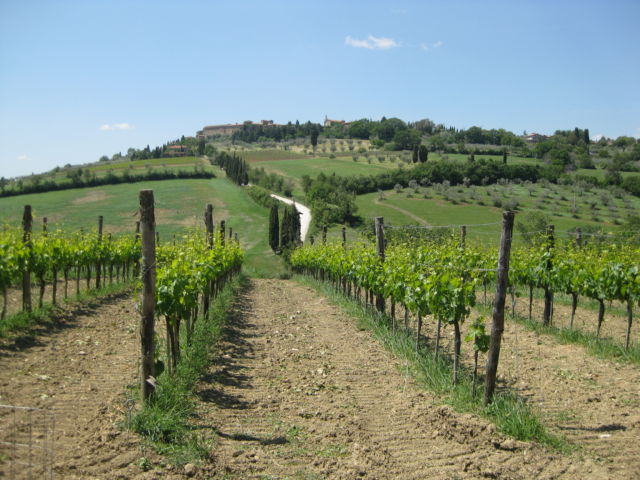 Tuscany scenic drive vineyards