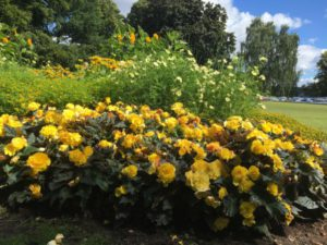 Stockholm nature tour by bike, flowers