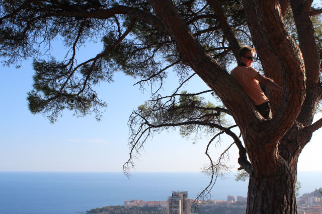 One day in Monaco, a better view from the tree