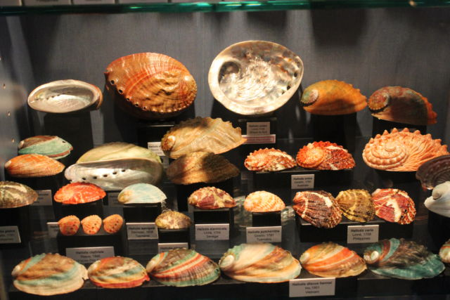 Saint-Jean sea shell museum