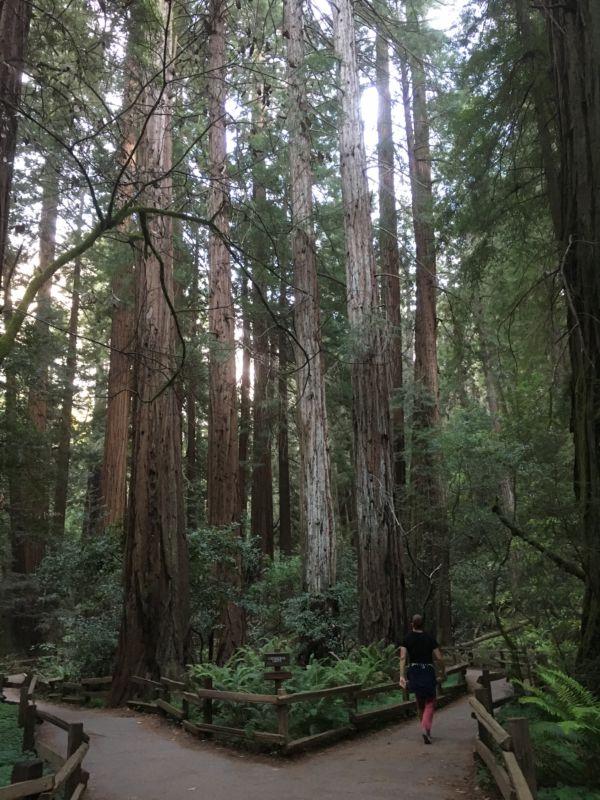 Muir Woods hiker