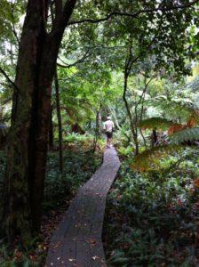 Mallacoota rainforest
