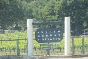Curtis Estate Vineyard
