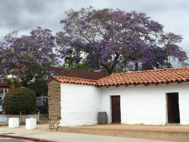 Santa Barbara in one day, jacarandas