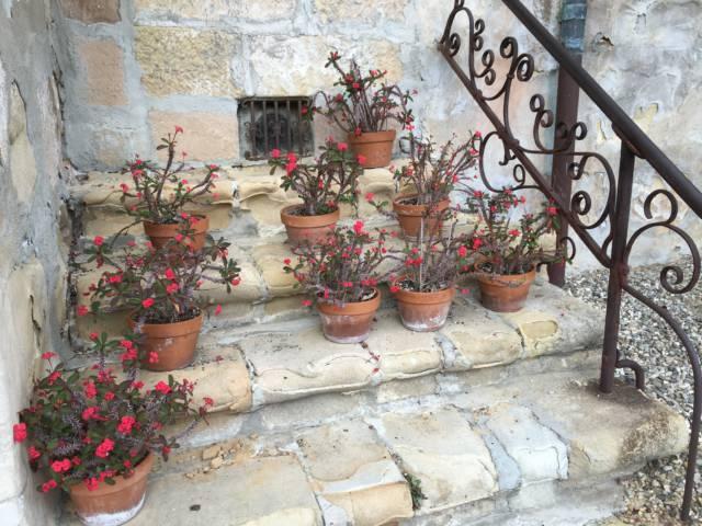 Santa Barbara Mission flower pots