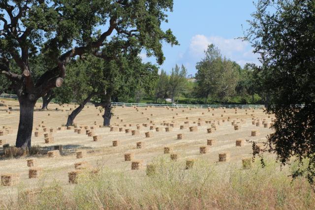 Santa Ynez Valley farm