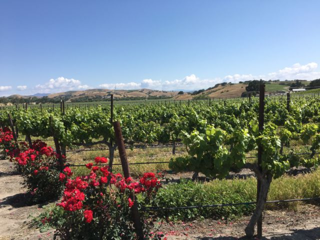 Santa Ynez Valley Wine Country view