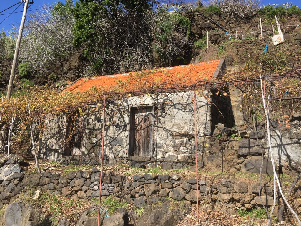 Calheta terraced vineyards