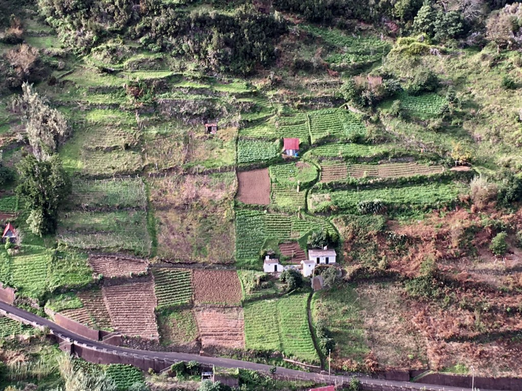 Ribeiro Frio to Faial terraced fields