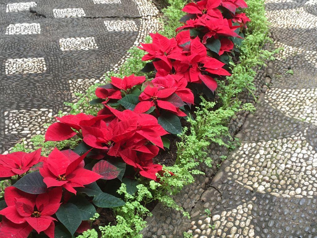Funchal Christmas decoration
