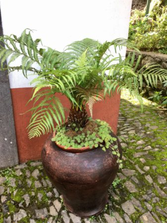 Ribeiro Frio fern