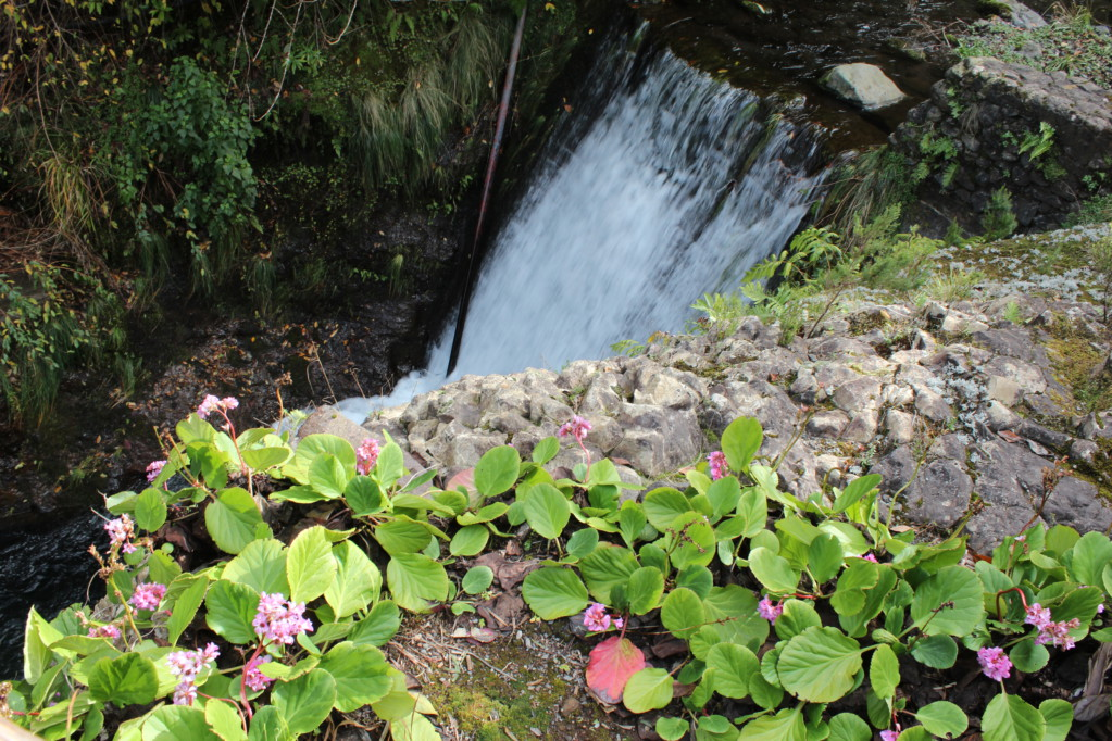 Ribeiro Frio waterfall and flowers