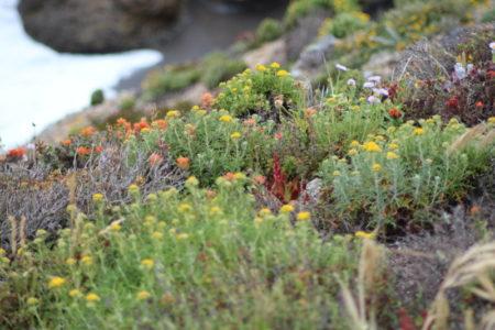 California vegetation