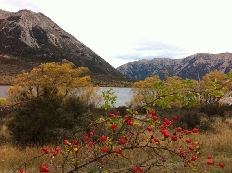 Christchurch to Greymouth lake view