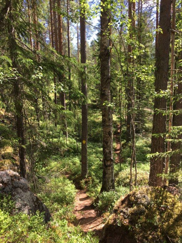 Loukkuvuori hike, Southern Konnevesi National Park