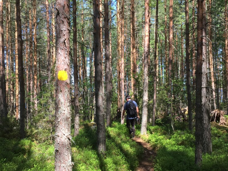 Marked walk in Southern Konnevesi National Park