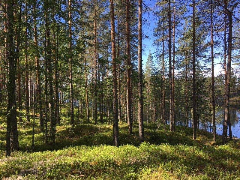 Southern Konnevesi National Park forest