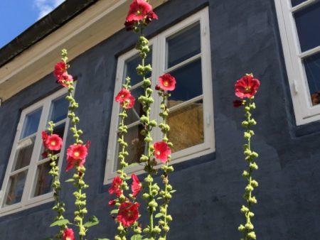 Aalborg Old Town flowers