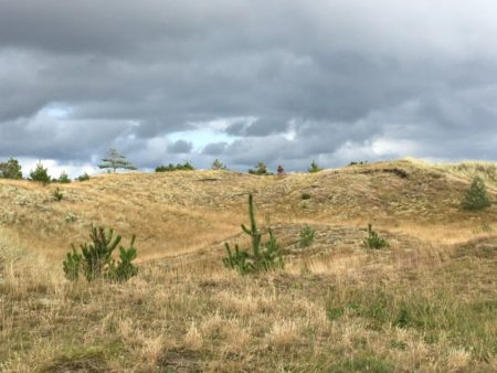 North Jutland sand dunes, Denmark