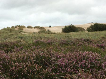 Råbjerg Mile, North Jutland