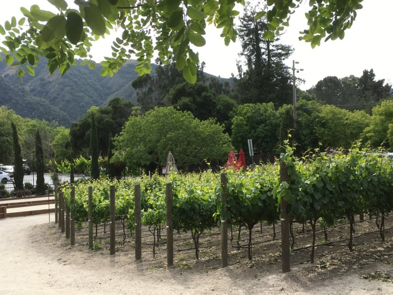 Carmel Valley vineyard