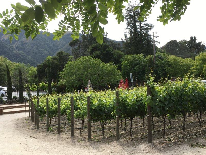 Carmel Valley vineyard