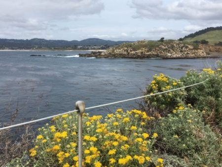 Hiking in Point Lobos State Reserve