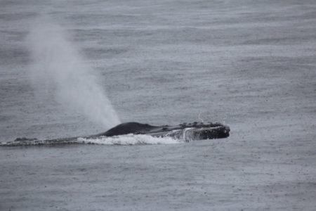Monterey Bay whale