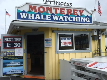 Monterey Whale Watching