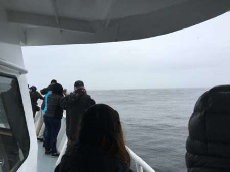 On a Monterey whale watching cruise
