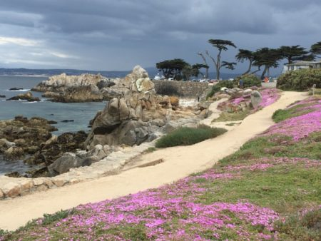 Pacific Grove ice flowers in bloom