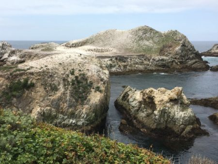 Point Lobos seabird colony