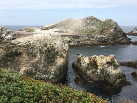 Point Lobos seabird colony