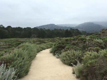 Point Lobos State Natural Reserve walking path